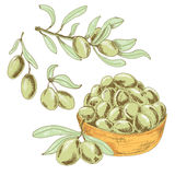 Collection of olives Royalty Free Stock Images