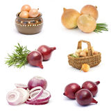 Collection of onion vegetable Stock Image