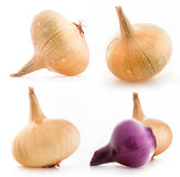 Collection of onions Royalty Free Stock Photos