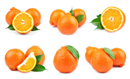 Collection orange Stock Photography