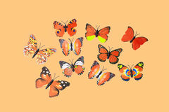 Collection Of Orange Fantasy Butterflies Royalty Free Stock Photography