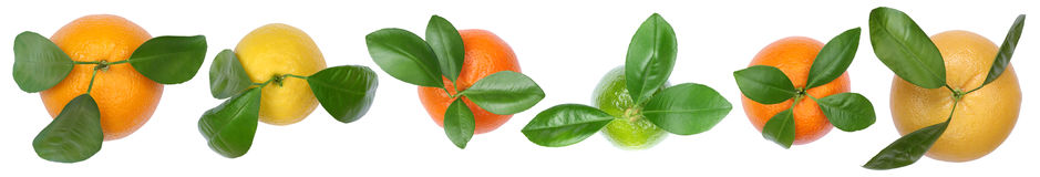 Collection of oranges fruits lemons grapefruit in a row top view Royalty Free Stock Photography