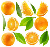 Collection of oranges with leaves isolated on the white backgrou Royalty Free Stock Image