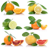 Collection of oranges mandarin lemon grapefruit fruits  Royalty Free Stock Photo