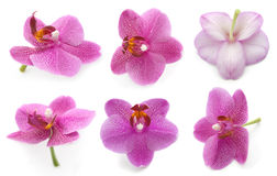 Collection orchid. Isolated on a white background. (flower orchid Royalty Free Stock Photo