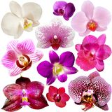 Collection of orchid flowers Stock Image