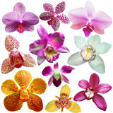 Collection of orchid flower Royalty Free Stock Images