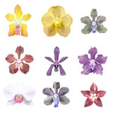 Collection of orchid flower Royalty Free Stock Image