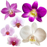 Collection of orchid flowers Stock Photography