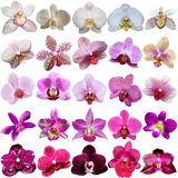Collection of orchids Royalty Free Stock Photography