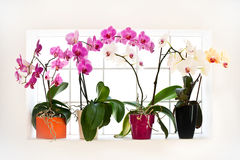 Collection of orchids Royalty Free Stock Image