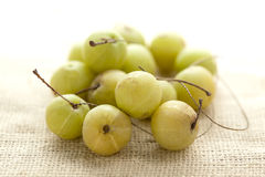 Collection of Organic Indian gooseberry (Phyllanthus emblica). Collection of Organic Indian gooseberry or Amla (Phyllanthus emblica) on jute mat Stock Images