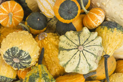 Collection of ornamental pumpkins Stock Images