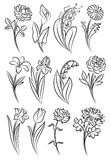 Collection of outlined flowers. Royalty Free Stock Photo