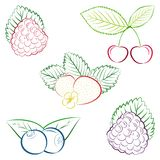 Collection of outlines strawberry, blueberry. Line drawing of strawberry, blueberry, cherry, blackberry. Unique hand drawn set for jam labels, icons, digital Stock Image