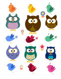 Collection of owl and bird Royalty Free Stock Images