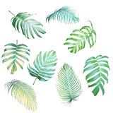 Collection of Palm leaves and Monstera philodendron in light green-yellow color tone, tropical leaves isolated on white vector illustration