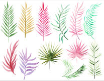 Collection Palm leaves Royalty Free Stock Photo