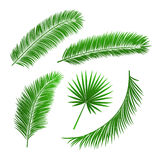 Collection of palm tree leaves Royalty Free Stock Photo