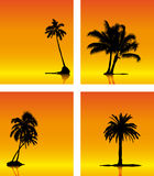 Collection of palm tree silhouette Royalty Free Stock Images