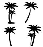 Collection of palm trees isolated on white background Stock Photos