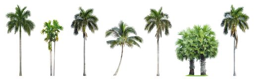 Collection of Palm trees isolated on white stock image