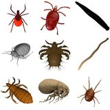 Collection of parasites royalty free illustration