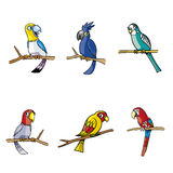 Collection of Parrot and Tree Colorful Royalty Free Stock Photos