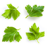 Collection of parsley isolated on white Royalty Free Stock Image
