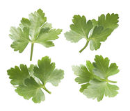 Collection of parsley leaves isolated on white background. Options for packaging design Stock Photo