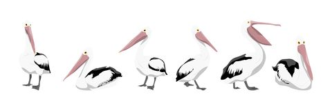 A collection of pelicans in various poses stock illustration