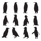 Collection of penguins silhouettes Royalty Free Stock Photo