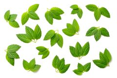 Collection of fresh peppermint leaves isolated on white, top view. Collection of peppermint leaves isolated on white background Stock Photos