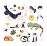 Collection of pets isolated on white background. Set of cute cartoon domestic animals - mammals, birds, fish, rodents. Reptiles and insects. Modern colorful royalty free illustration