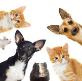 Collection pets. On a white background Royalty Free Stock Photography
