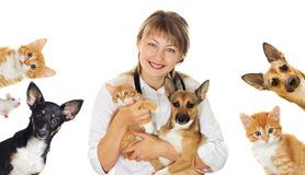 Collection pets Stock Images