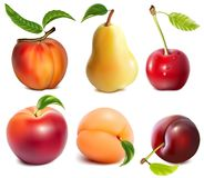 Collection of vector fruits. Royalty Free Stock Photography