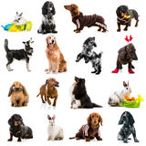 Collection photos of cute dogs and rabbits stock images