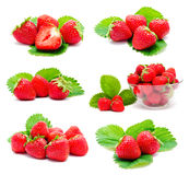 Collection of photos perfect ripe strawberry Stock Images