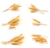 Collection of photos wheat ears and seed Royalty Free Stock Photos