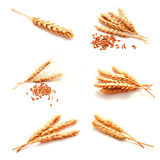 Collection of photos wheat ears and seed isolated Royalty Free Stock Photo