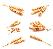 Collection of photos wheat ears and seed isolated Royalty Free Stock Photography