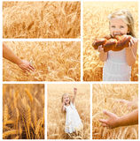 Collection of photos wheat field and little girl Stock Photo