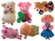Collection of pigs. Collection of isolated pigs (part 1 Stock Images