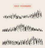 Set pine forest backgrounds vector drawn sketch Royalty Free Stock Image