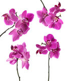 Collection of pink beautiful orchid Stock Photo