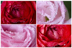 Collection of pink flowers Stock Image