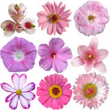 Collection of pink  flowers Royalty Free Stock Images