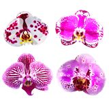 Collection of pink orchid flowers isolated. Stock Image