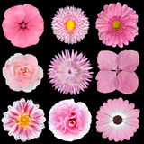 Collection of Pink White Flowers Isolated on Black Royalty Free Stock Images